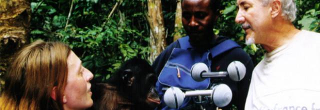 Bonobo, le hippie des grands singes